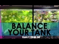 HOW TO BALANCE YOUR TANK 🌱💧| DAILY TRIM 30