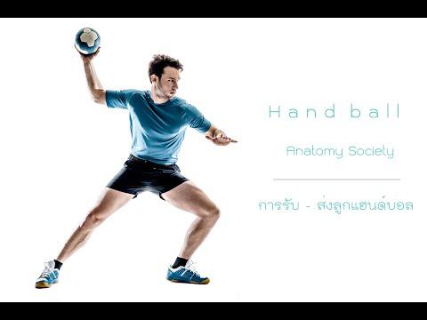 การรับ - ส่งลูก กีฬาแฮนด์บอล  : Anatomy Society