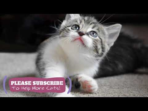 Relaxing Music for Cats  2 Hours Cat Sleep Music New 2019 ☯LCZ34