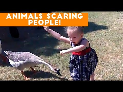 Funniest Animals Scaring