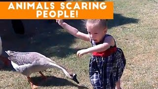 Funniest Animals Scaring People Reactions Of 2017 Weekly Compilation  Funny Pet Videos