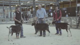 Marché-concours intercanontal du petit bétail 2016 - 74e édition