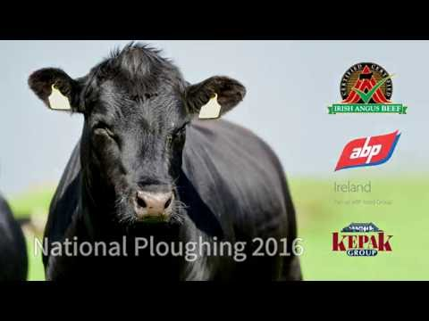 Certified Irish Angus Beef Ploughing 2016 Short Video