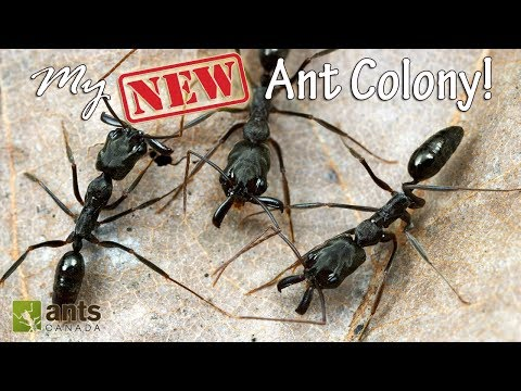 MY NEW ANT COLONY - AWESOME!