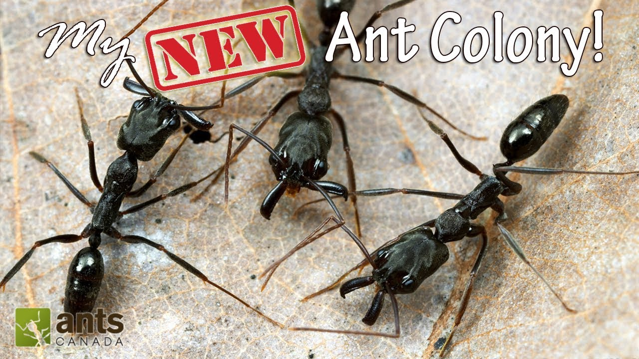 my-new-ant-colony-awesome