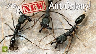My New Awesome Ant Colony thumbnail