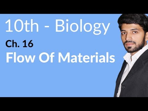 10th Class Biology, Flow Materials & Energy - Biology Chapte