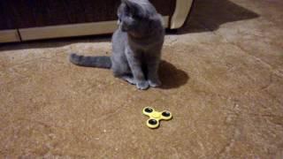 Кот крутит спиннер смешное видио / Cat play spiner funny video