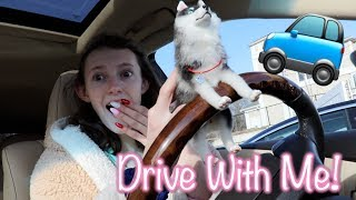 DRIVE WITH ME! Starbucks, Valentine's Day Tea, & a Dog Drives my Car! | Kelli Maple