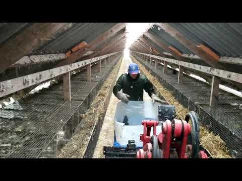 ⚫Работа в Дании 🐭Норки🐭 Работа на ферме ⚫