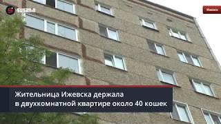 Жительница Ижевска развела в квартире более 30 кошек