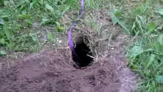 igler finder hul fra mosegris
