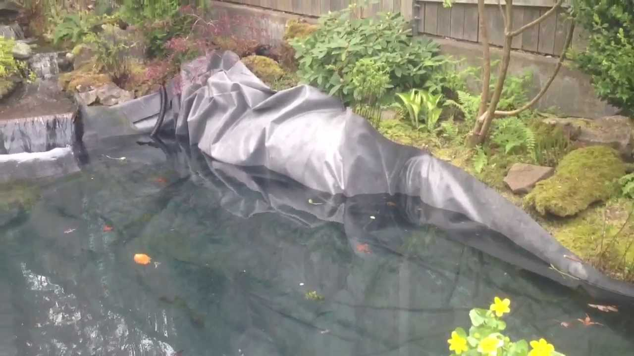 How To Build A Pond New Koi Pond Build Well Old Koi