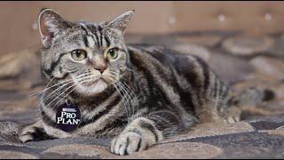 Профилактика мочекаменной болезни у кошек: советы ветеринара