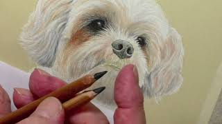 Drawing a Shih Tzu Nose with Pastel Pencils