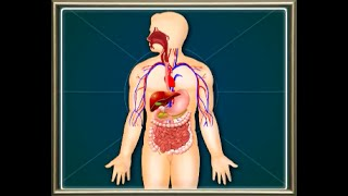 Science: Bilogy: Digestive System : The organ systems in the Human body