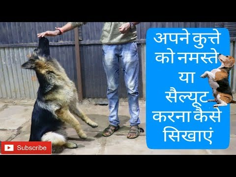 How to train a dog to do namaste or sit pretty or salute in Hindi  | Dog training in Hindi |