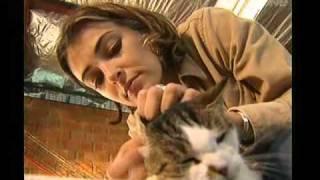 Harry's Practice - how to look after an elderly cat