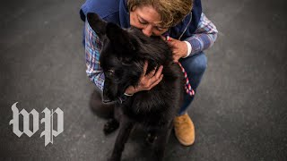 How some dog rescuers have become a lucrative part of the dog breeding business