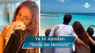 Shakira y Piqué viven uno de los mejores momentos de su relación