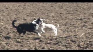 "Nz Sheep Dog At Work - Bringing Down A Lamb - ""sheep Station Nz"" Taster 02"