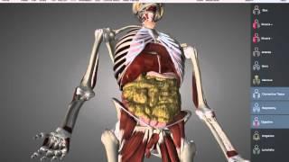 видео Атлетический пояс