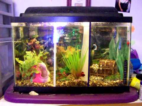 10 gallon divided betta tank youtube for Split fish tank