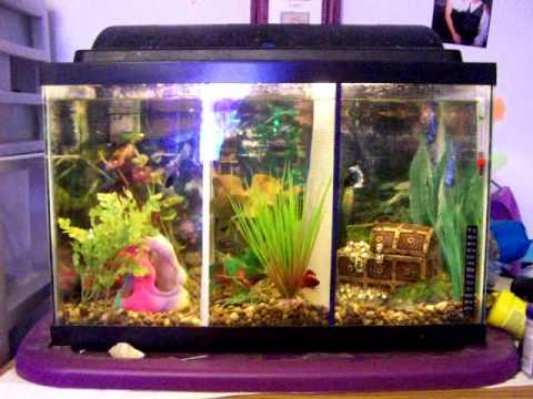 10 gallon divided betta tank doovi for Fish tank divider 5 gallon