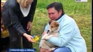 Приют для собак в Слободском (ГТРК Вятка)