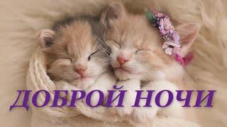 ДОБРОЙ НОЧИ! Желаю приятных сновидений!