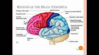 7d brain structure and function