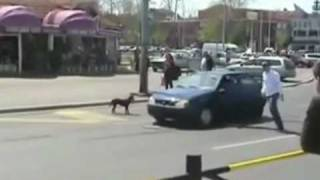Dog vs. Car! lmfao MUST SEE!!!!