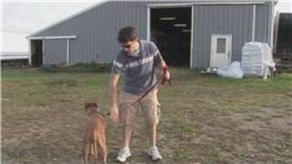 Dog Training Tips : How to Wash a Dog