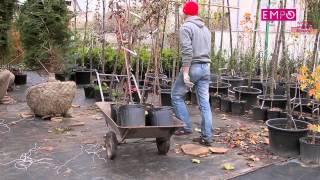 История успеха Алексея Цилыка (Садовый центр Green Sad)(, 2013-01-15T12:57:58.000Z)