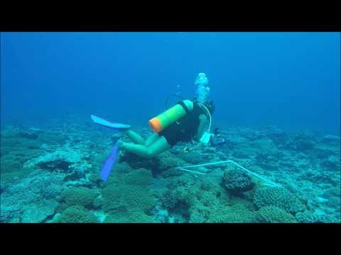 Interning with the Climate Change Division in the Cook Islands