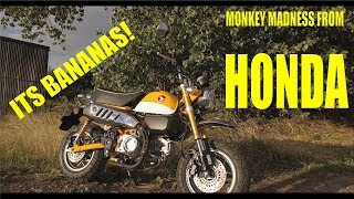 2018 HONDA MONKEY BIKE - SUPER FUN TEST RIDE! WHEELS MOTORCYCLES