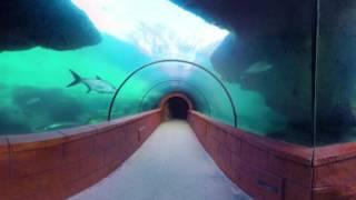 Atlantis Predator Tunnel in 360 degrees