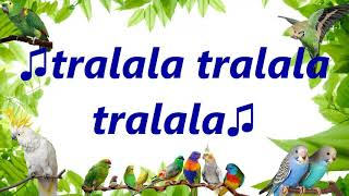 "Teach your bird to say ""tralala tralala"" sound parrot budgie..."
