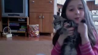 Как играть с котом / Британский чёрный мраморный
