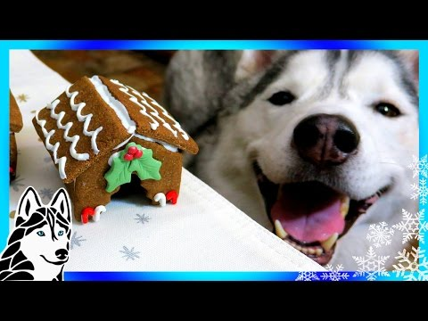 DIY GINGERBREAD DOG HOUSE for Christmas 🎄 | DIY Dog Treats | Snow Dogs Snacks 62