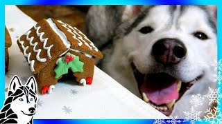 DIY GINGERBREAD DOG HOUSE for Christmas  | DIY Dog Treats | Snow Dogs Snacks 62