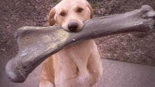 Cute is Not Enough - Funny Cats and Dogs Compilation #208