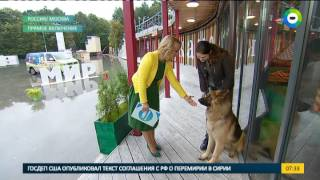 Собака из приюта. В гостях - Любовь Лебедева и Рэм. Эфир от 23.09.2016