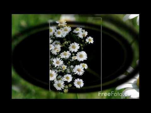 Hoa cuc dai (Daisy OST - Piano)