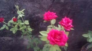 Pabna Padma Choray Dhorshon Koray Maray Felo Ak Nari Ky