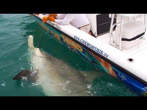 Fishing Awesome 1,000 Pound Hammerhead Shark Giant Fish