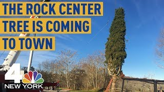 Your First Look at the 2018 Rockefeller Center Christmas Tree | News 4 New York