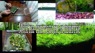 Яванский мох на синтепоне и плитке / Moss
