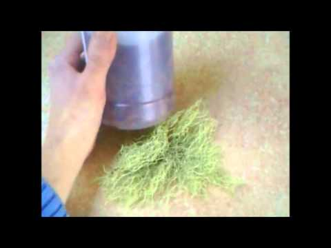 Oregon Usnea lichen Identification and Usage Ideas TCM THEORY