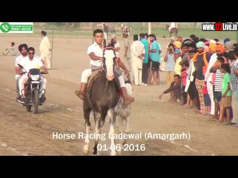 Horse Racing (Laddewal) www.123Live.in